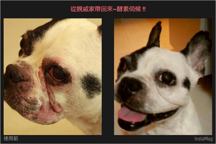 台湾宠物护理1