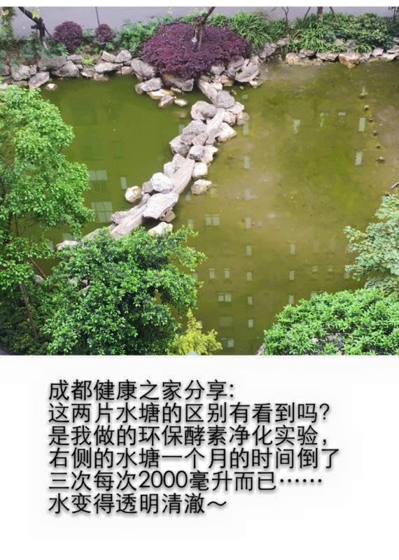 中国 净化水塘